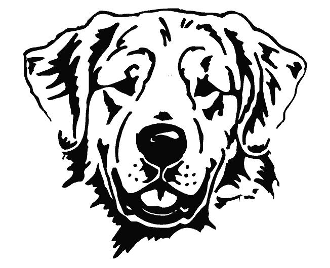 Line Drawing Golden Retriever : Golden retriever line drawing